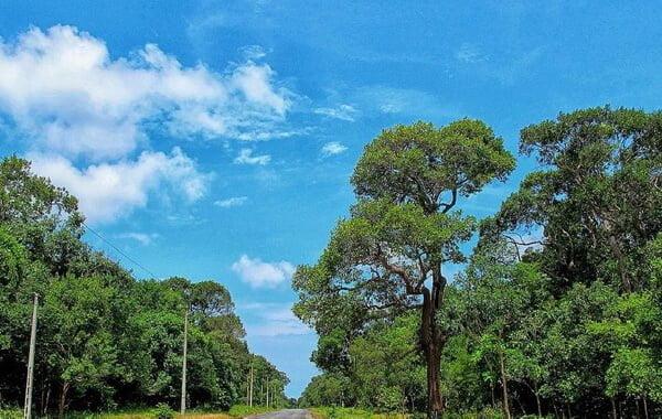 Khu bảo tồn thiên nhiên Phước Bửu - Bình Châu