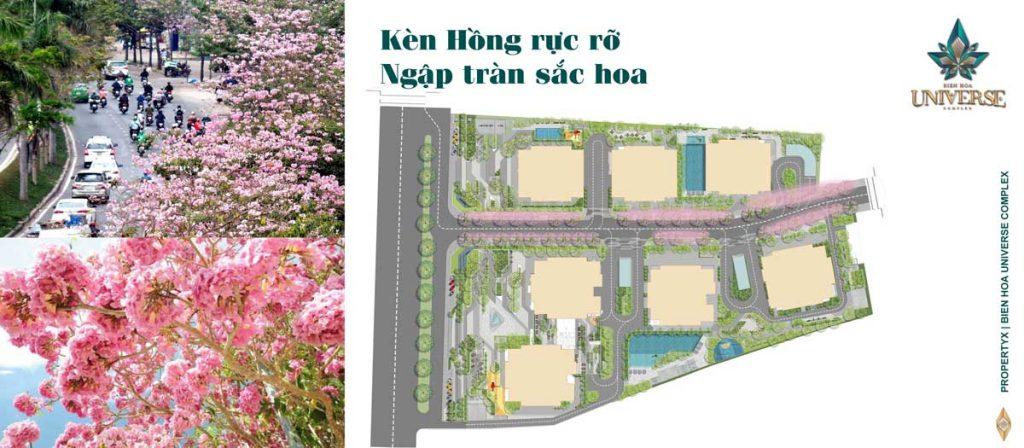 Kèn Hồng rực rỡ ngập tràn sắc hoa tại đường nội khu dự án
