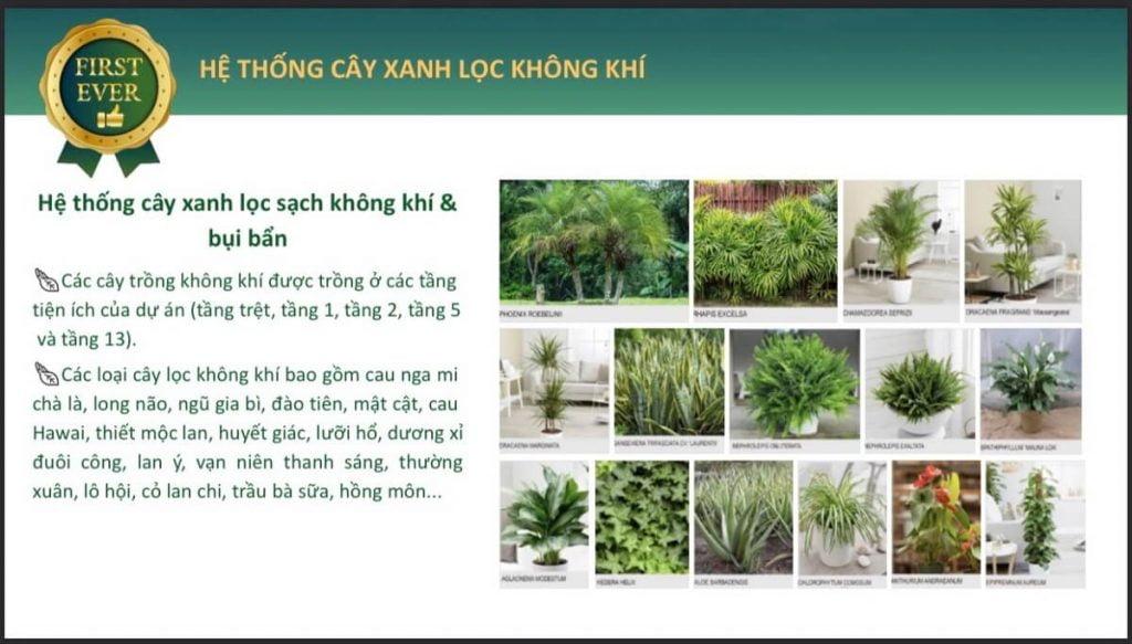 Hệ thống các loại cây xanh lọc không khí tại Celesta Heights