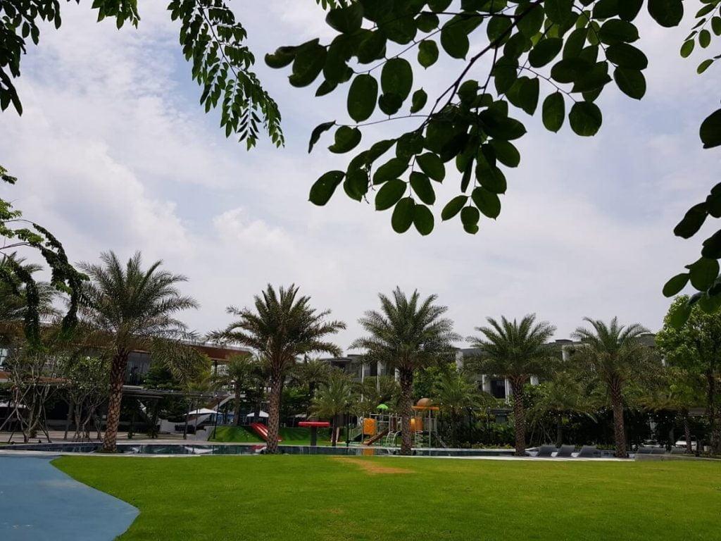 Bãi cỏ tự nhiên giữa công viên