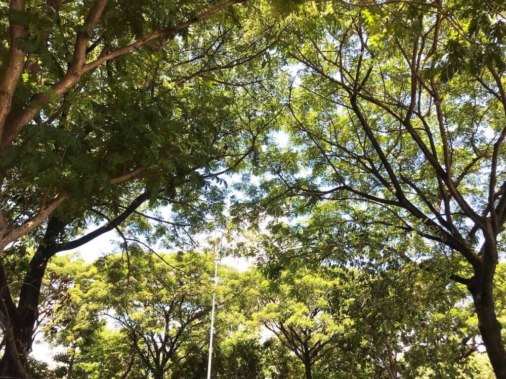 Hệ thống cây xanh tại Eco Xuân